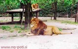 italija zoo