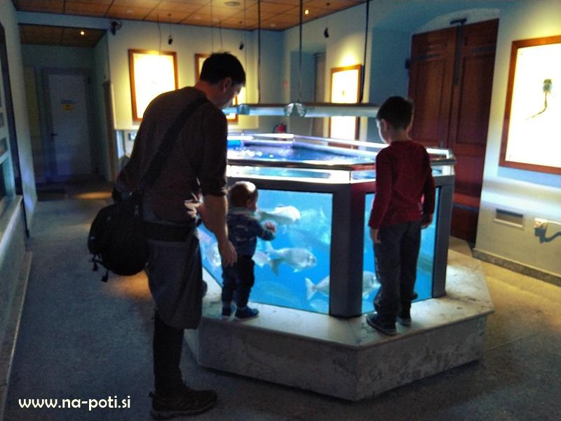 Piran akvarij