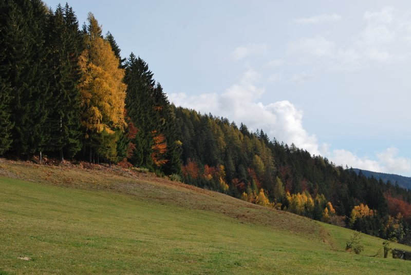 Gozd jeseni